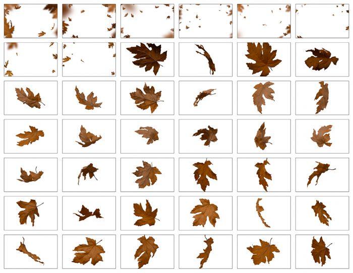 Autumn Leaves Overlay, Brown Leaves
