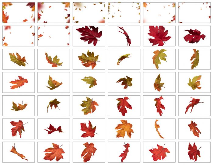 Autumn Leaves, Falling Leaves Overlay