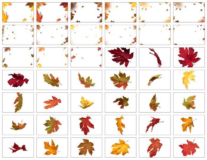 Autumn Leaves Overlay Bundle