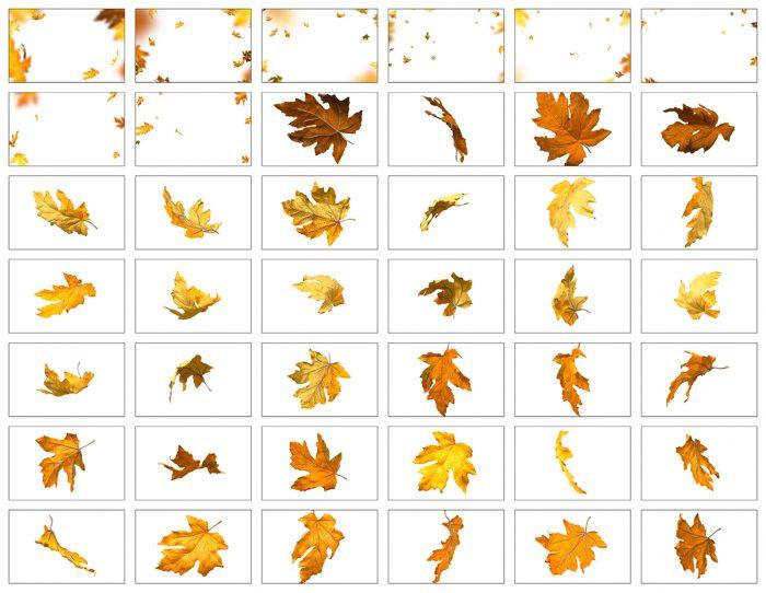 Autumn Leaves, Falling Leaves Overlay