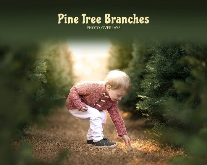 Pine Branch Overlays