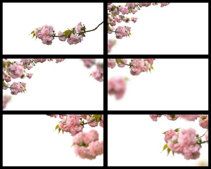 Cherry Blossom Branch Overlays