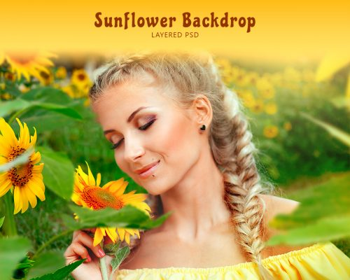 Sunflower Backdrop