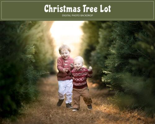 Christmas Tree Lot Backdrop